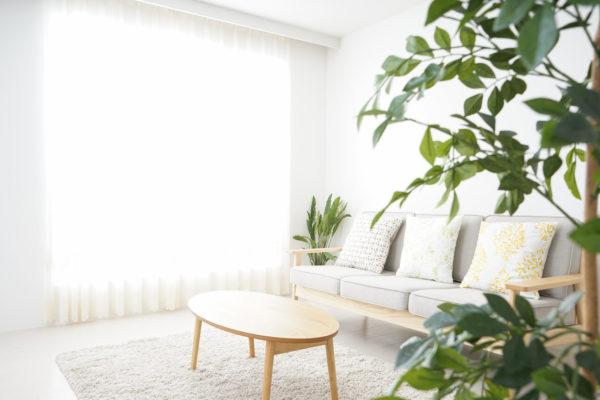 カーテンから光が差し込んでいる綺麗な部屋