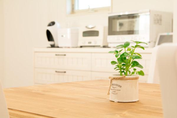 木製テーブルと観葉植物